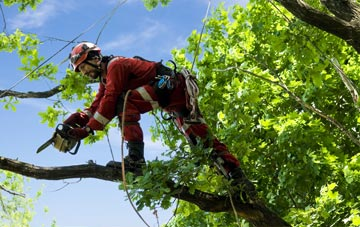find trusted rated Northamptonshire tree surgeons