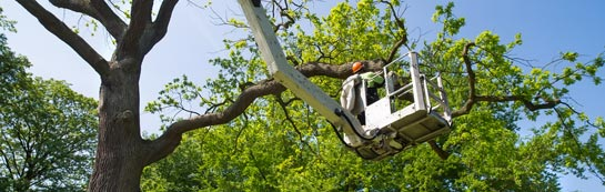 Northamptonshire tree surgery services