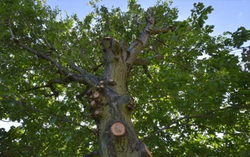 what is Northamptonshire tree surgery?